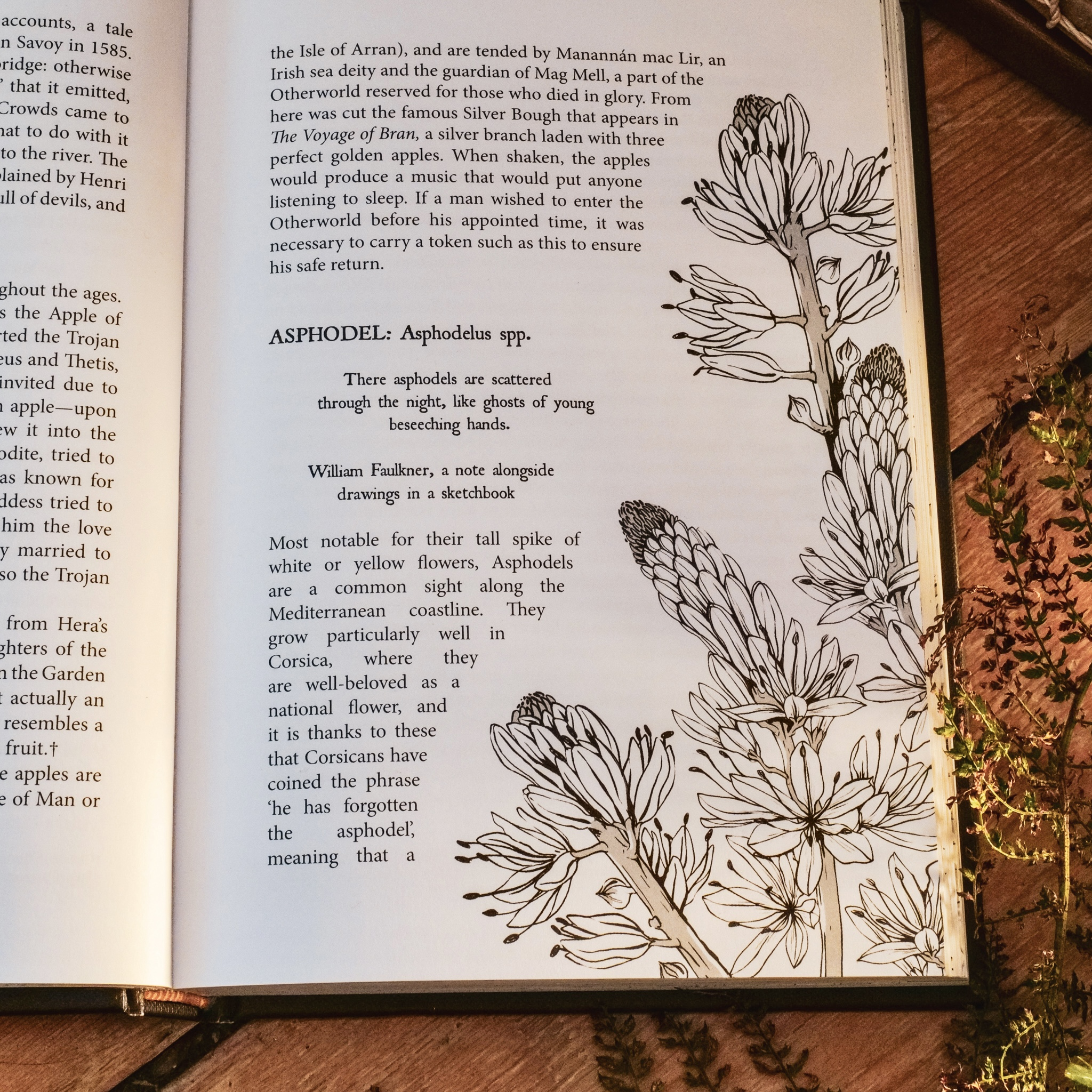 Asphodel from Botanical Curses and Poisons by Fez Inkwright